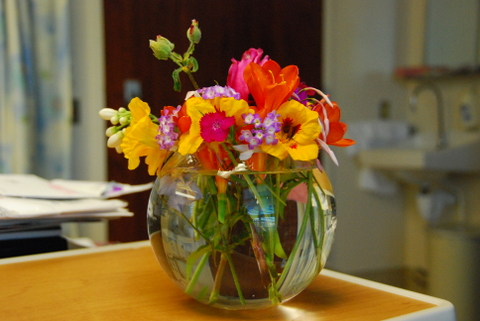 a sampling of flowers from our yard